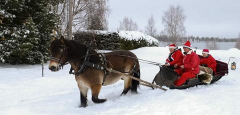 Luspens Ryttarförening behövde nya hästar – samlade enkelt in pengar via laget.se